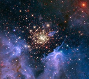 Like a 4th of July fireworks display, a young, glittering collection of stars looks like an aerial burst. The cluster is surrounded by clouds of interstellar gas and dust—the raw material for new star formation. The nebula, located 20,000 light-years away in the constellation Carina, contains a central cluster of huge, hot stars, called NGC 3603. This environment is not as peaceful as it looks. Ultraviolet radiation and violent stellar winds have blown out an enormous cavity in the gas and dust enveloping the cluster, providing an unobstructed view of the cluster. Most of the stars in the cluster were born around the same time but differ in size, mass, temperature, and colour. The course of a star's life is determined by its mass, so a cluster of a given age will contain stars in various stages of their lives, giving an opportunity for detailed analyses of stellar life cycles. NGC 3603 also contains some of the most massive stars known. These huge stars live fast and die young, burning through their hydrogen fuel quickly and ultimately ending their lives in supernova explosions. Star clusters like NGC 3603 provide important clues to understanding the origin of massive star formation in the early, distant Universe. Astronomers also use massive clusters to study distant starbursts that occur when galaxies collide, igniting a flurry of star formation. The proximity of NGC 3603 makes it an excellent lab for studying such distant and momentous events. This Hubble Space Telescope image was captured in August 2009 and December 2009 with the Wide Field Camera 3 in both visible and infrared light, which trace the glow of sulfur, hydrogen, and iron.