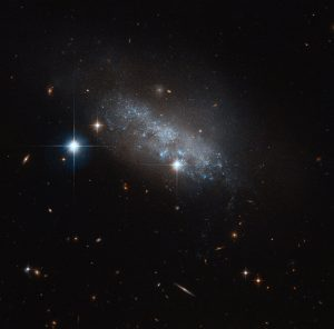 This delicate blue group of stars — actually an irregular galaxy named IC 3583 — sits some 30 million light-years away in the constellation of Virgo (The Virgin). It may seem to have no discernable structure, but IC 3583 has been found to have a bar of stars running through its centre. These structures are common throughout the Universe, and are found within the majority of spiral, many irregular, and some lenticular galaxies. Two of our closest cosmic neighbours, the Large and Small Magellanic Clouds, are barred, indicating that they may have once been barred spiral galaxies that were disrupted or torn apart by the gravitational pull of the Milky Way. Something similar might be happening with IC 3583. This small galaxy is thought to be gravitationally interacting with one of its neighbours, the spiral Messier 90. Together, the duo form a pairing known as Arp 76. It's still unclear whether these flirtations are the cause of IC 3583's irregular appearance — but whatever the cause, the galaxy makes for a strikingly delicate sight in this NASA/ESA Hubble Space Telescope image, glimmering in the blackness of space.