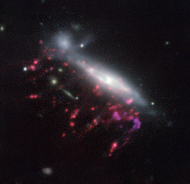 "Observations of ""Jellyfish galaxies"" with ESO's Very Large Telescope  have revealed a previously unknown way to fuel supermassive black holes.  It seems the mechanism that produces the tentacles of gas and newborn  stars that give these galaxies their nickname also makes it possible for  the gas to reach the central regions of the galaxies, feeding the black  hole that lurks in each of them and causing it to shine brilliantly. This  picture of one of the galaxies, nicknamed JO204, from the MUSE  instrument on ESO's Very Large Telescope in Chile, shows clearly how  material is streaming out of the galaxy in long tendrils to the  lower-left. Red shows the glow from ionised hydrogen gas and the whiter  regions are where most of the stars in the galaxy are located. Some more  distant galaxies are also visible."