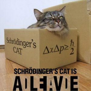 Gatto di Schroedinger